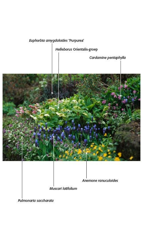 Tuin & Landschap | Foto & film - early spring low-growing shade grouping