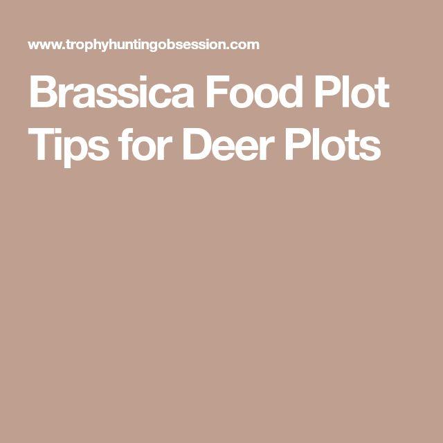 Brassica Food Plot Tips for Deer Plots