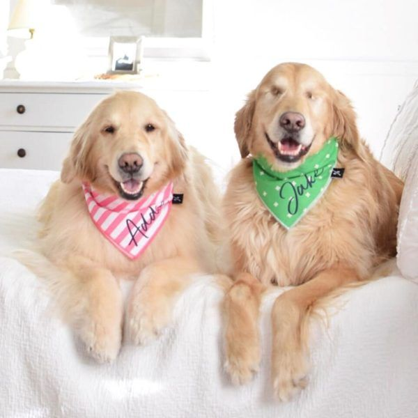 This Blind Dog S Golden Retriever Sister Acts As His Own Guide Dog Golden Retriever Blind Dog Guide Dog