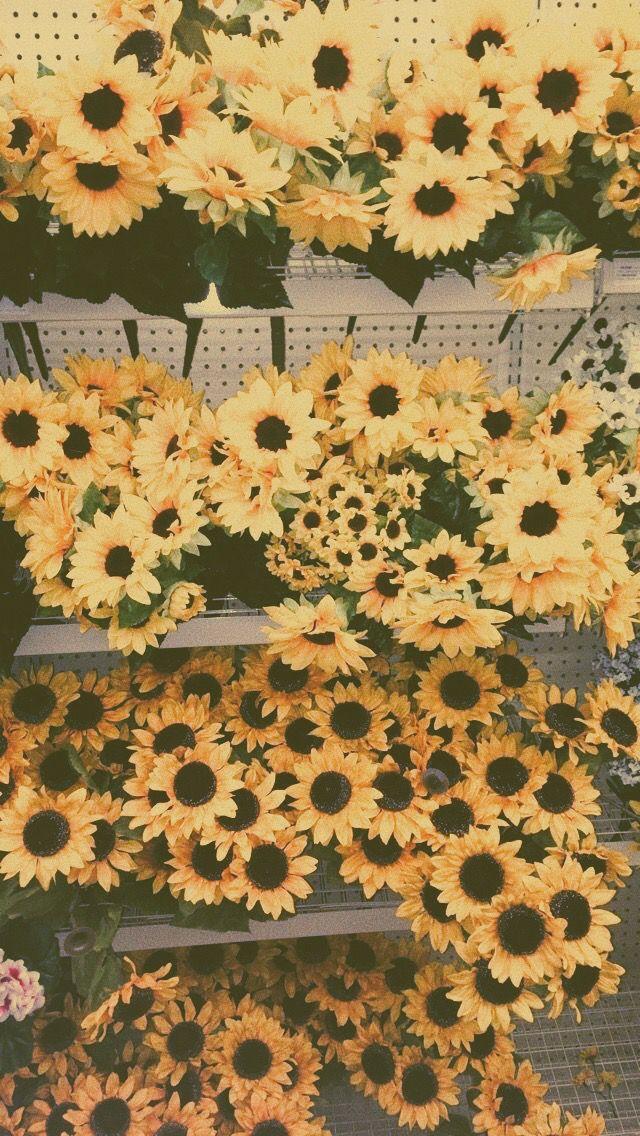 Sunflower Yellow Summer Aesthetic Vsco With Images Boho