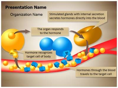 Hormone Glands Enzymes PowerPoint Presentation Template is one of the best Medical PowerPoint templates by EditableTemplates.com. #EditableTemplates #Function #Medical #Follicle #Ovary #Genetic strual #Vessel #Biology #Endocrine #Anatomy #Homeostasis #Action #Cell #Ovum #Care #Fertility struation #Tissue #Medicine #Secretion #Pancreas #Body #Hormorgan #Diabetes #Human #System #Cycle #Female #Gynecology #Education #Diagram #Illustration #Blood #Hormone Glands Enzymes #Insulin #Fertilization