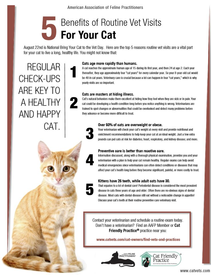 Routine Vet Visits For Your Cat Are Important Here S Why Vet Visits Vets Dog Care