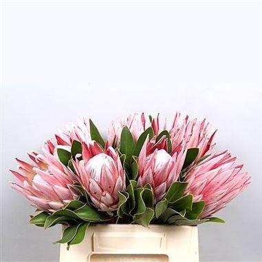 protea flowers as a centre piece