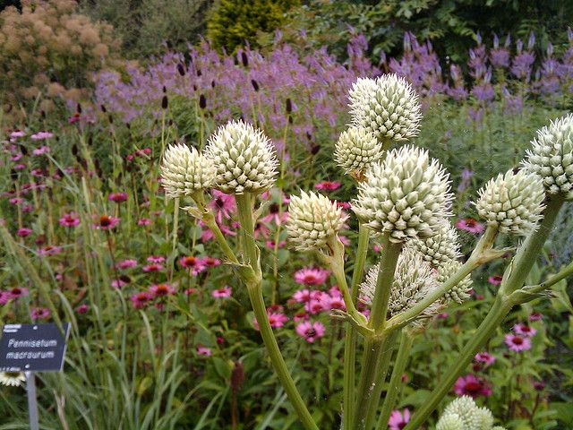 17 best images about piet oudolf gardens on pinterest for Piet oudolf favorite plants