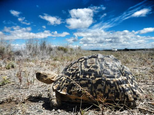 Road of Discovery: On the road to Destination 4 - Deep in the Karoo