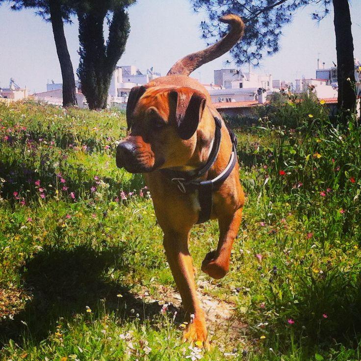 sping sprinter