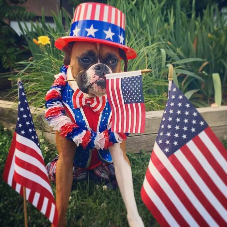 4th of july dog clothes