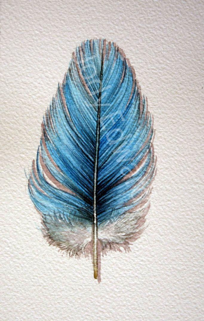 Budgie Feather Original Watercolor Nightly Study 671 от jodyvanB
