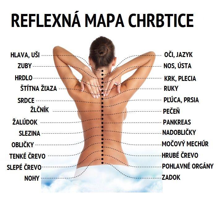 Naša chrbtica a stavce, tam sa nachádza množstvo nervových zakončení, pričom každé z nich funguje ako reflexný bod, ktorý je združený s príslušným orgánom alebo celým systémom orgánov. Problém v nejakom orgáne môže viesť k chronickým pomalým procesom, ktoré sa odzrkadľujú potom priamo -na vašich stavcoch a chrbtici. Ak vás často bolí chrbát a identifikujete …