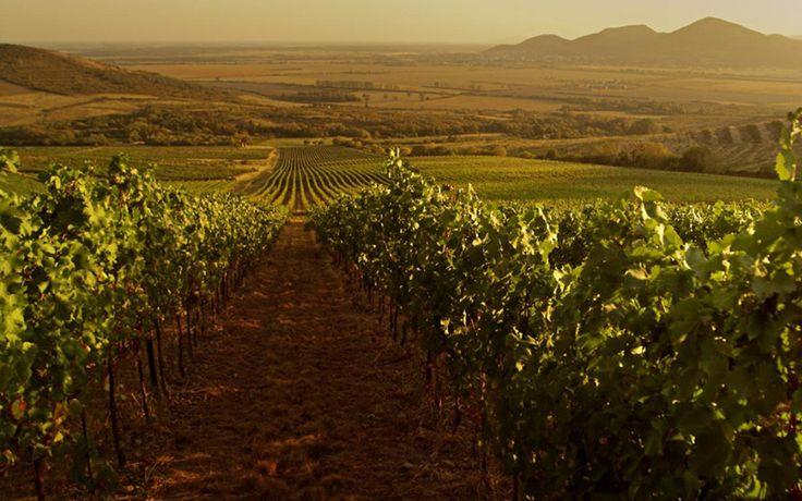 Tokaj Wine Region #Travel #Europe #Hungary