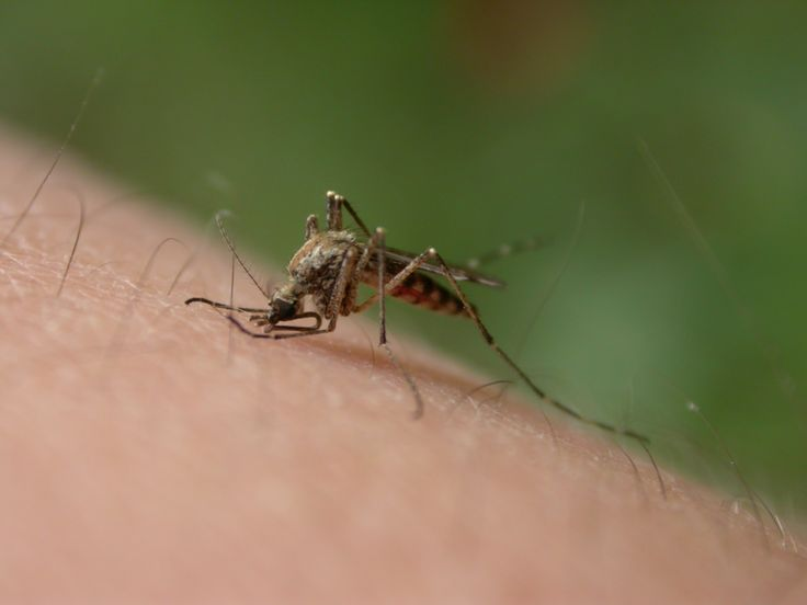 Another great article added to the Kiyora Blog - Follow these tips to avoid pesky mosquito bites when traveling throughout the tropics #chiangmai #thailand  http://kiyoraspa.com/how-to-deal-with-mosquitoes-while-on-vacation/