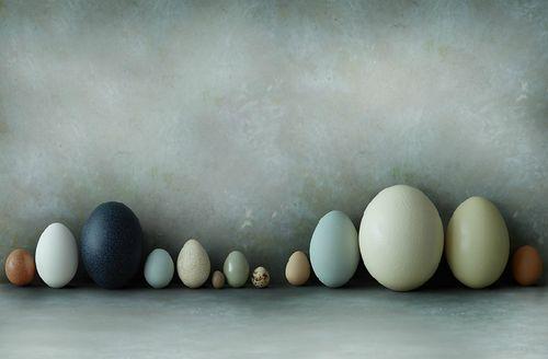 egg design | Easter egg . Osterei . œuf de Pâques | @ A well traveled woman |