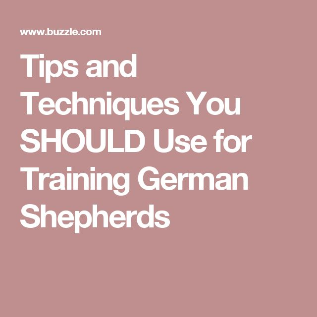 Tips and Techniques You SHOULD Use for Training German Shepherds