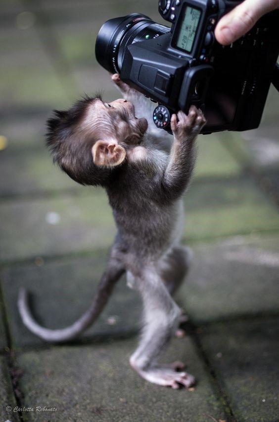 Nur 16 niedliche Affenbabys, die Sie zum Staunen bringen werden – Jodis stuff