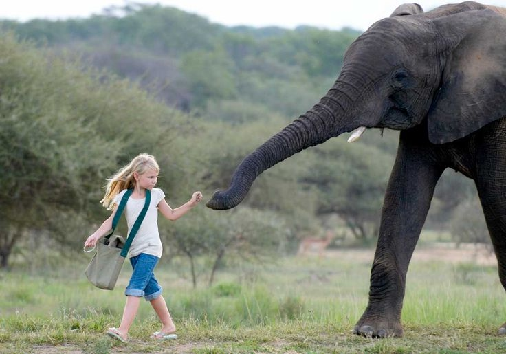 Kapama Private Game Reserve in the Greater Kruger is the home of sustainable elephant interactions. 🐘 Zero elephant rides here. Learn more & explore holidays featuring Kapama: