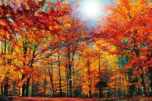 Jesienne krajobrazy / Fall landscapes #wallpapers #tapety #krajobrazy #widoki #landscapes