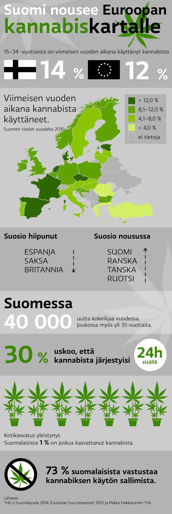 Suomi nousee kannabis-kartalle -infografiikka