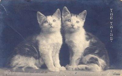 vintage photo-twins lolCatscatscat