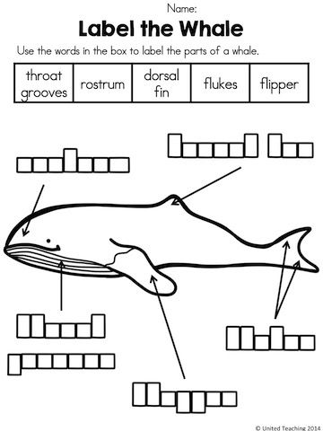 Label the Whale >> Part of the Polar Animals No Prep Activities Packet >> Many fun and interactive activities to accompany a unit on Polar Animals.