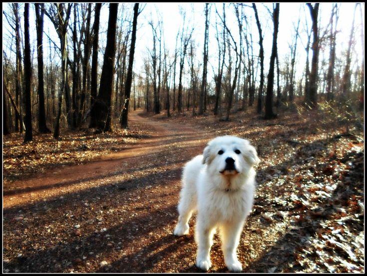 Hiking with George at Huckleberry Ridge, Missouri.