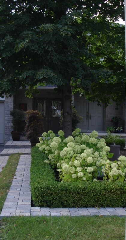 Annabelle Hydrangea with boxwood border. something like this might be good fro front yard, instead of a fence.