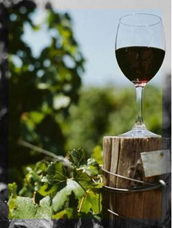 italiandipity:  Bonarda Wine Oltrepo-pavese