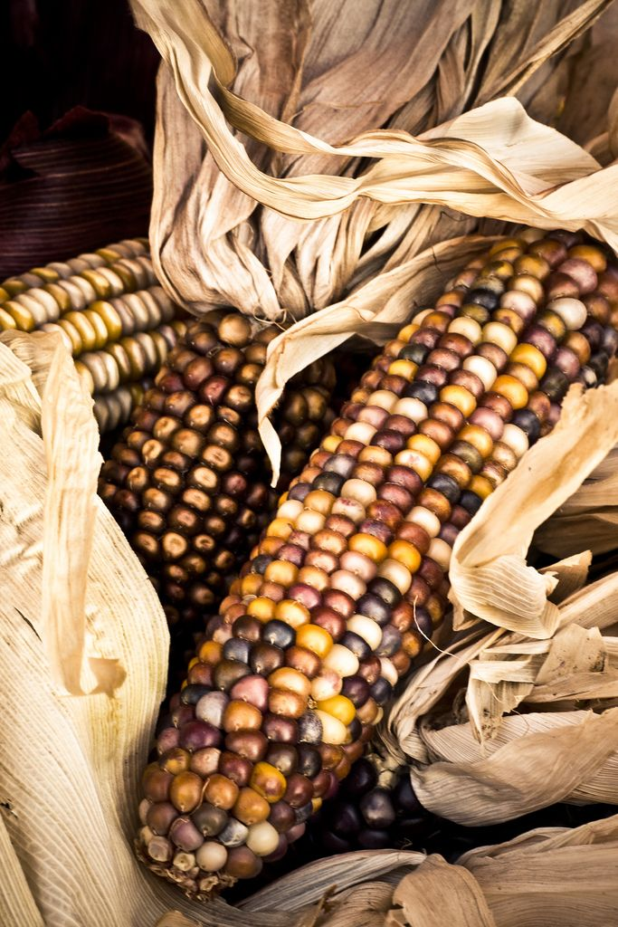 Corn Cob by Christian Jones, flickr