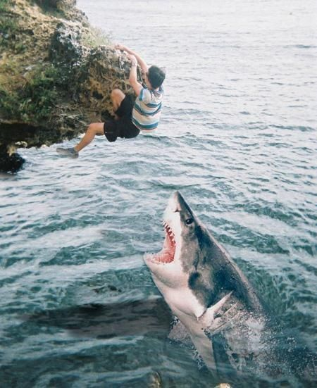 Not so cool!: Animals, I Ll Catch, Funny Stuff, Humor, Funny Animal, Shark Week, Sharks