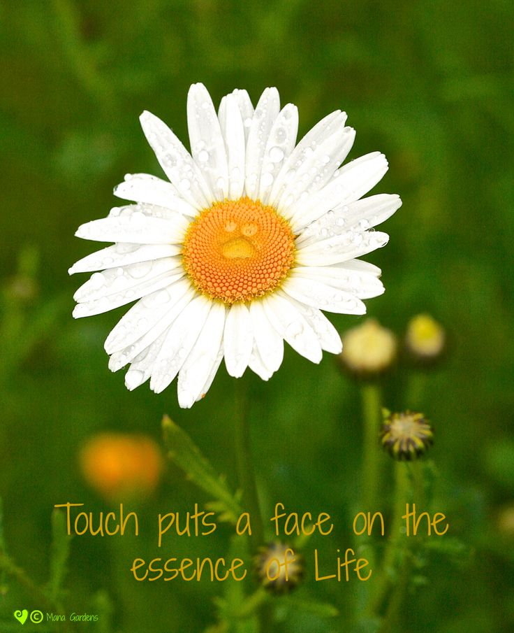 Touch puts a face on the essence of Life Inspirational words from Mana Garden