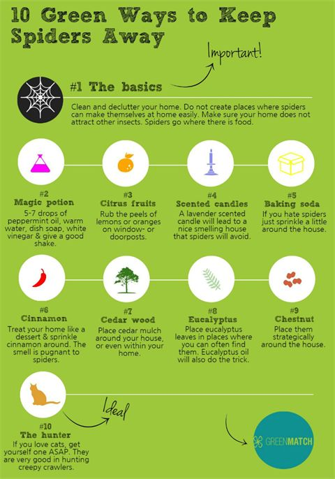 10 Green Ways To Keep Spiders Away -infgr