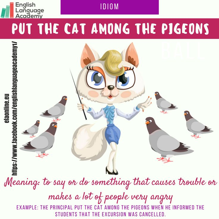 Idiom: Put the cat among the pigeons