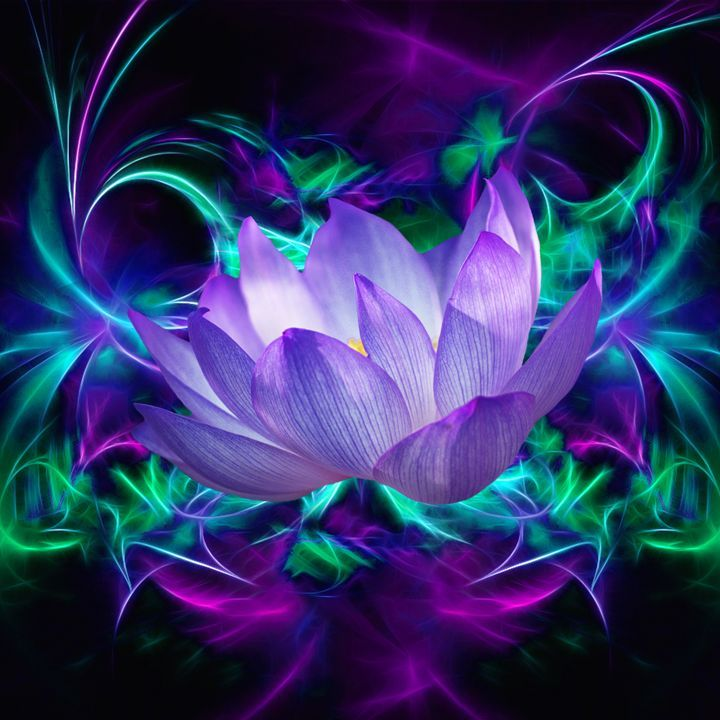Purple Lotus Flower - Laureenr