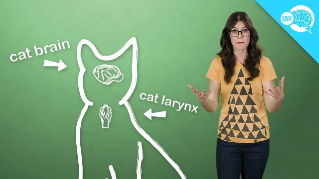 How (And Why) Do Cats Purr? [video]