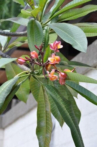 Flora in the garden #2