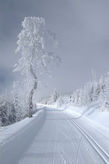 WHITE WINTER: Winter Snow, The Roads, Winter Scene, Crosses Country Skiing, Winter Wonderland, Trees, Wintersnow, Places