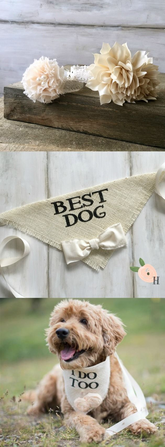 Pin now for later! We have everything you need to include your beloved dog in your Wedding pictures. Collars, leashes, and unique bandanas for your special day.