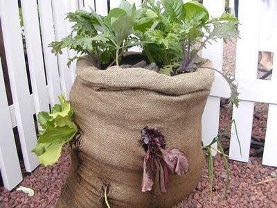 76 Best Images About Burlap Bag Garden On Pinterest Herb