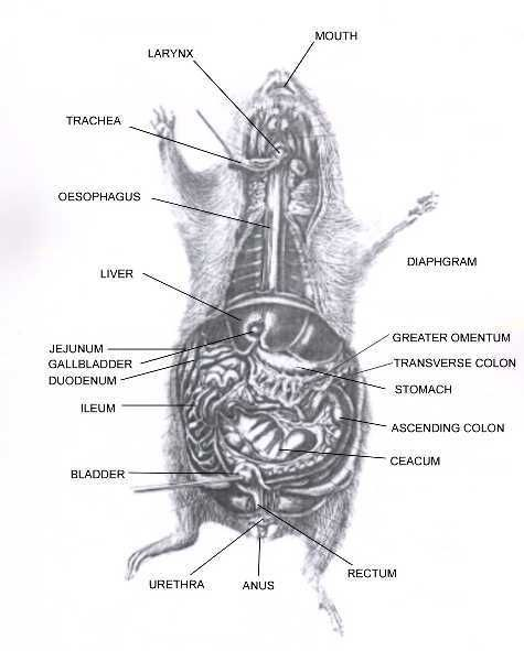 167 best images about anatomy on pinterest