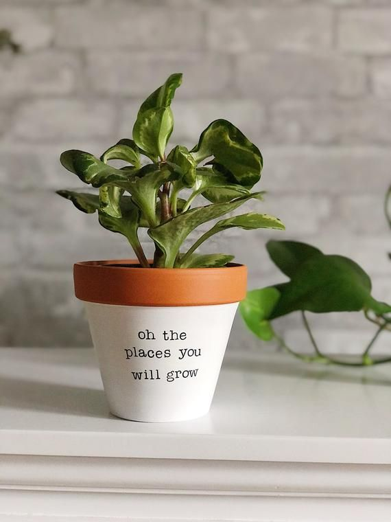 Oh The Places You Will Grow Small Planter Secret Santa Gift Gift For Friend New Job Gift Travel Gift Gift Abroad First Time Mom Mum In 2020 Plant Pot Diy Small
