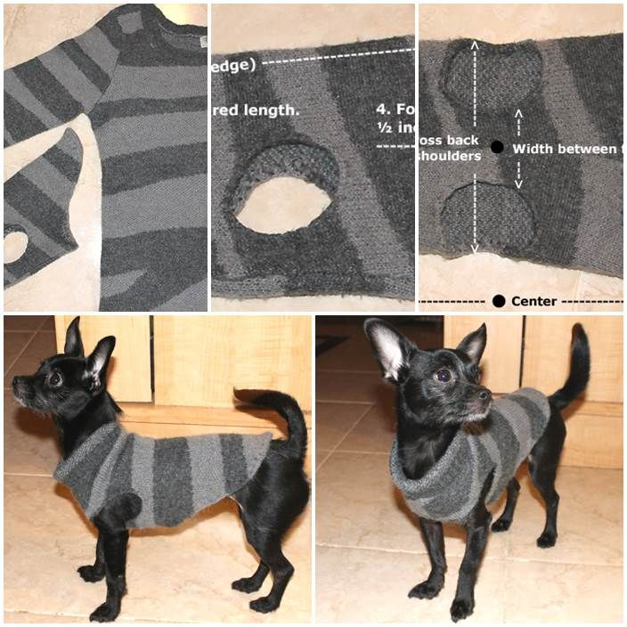 Here+are+the+things+you+will+need:+An+old+sweater+Scissors+Source:+http://voknits.com/recycled-dog-sweater/