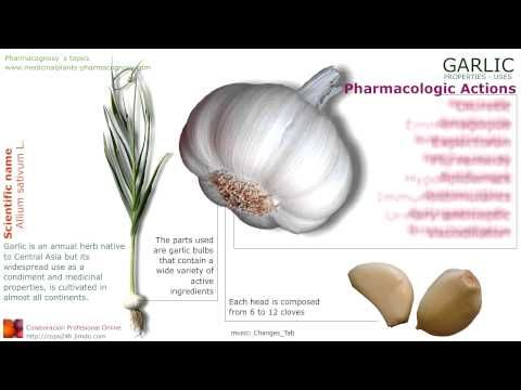 Properties of garlic. Scientific name. Features and medicinal properties of garlic, Garlic content. Active ingredients of garlic. Contains essential oil of garlic. Garlic vitamins. Medicinal uses of garlic. Indications of garlic use. See more details at: http://www.medicinalplants-pharmacognosy.com/herbs-medicinal-plants/garlic/