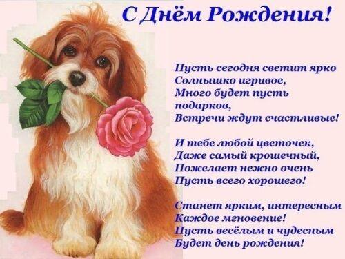 Поздравление с днем рождения, Собака с цветком