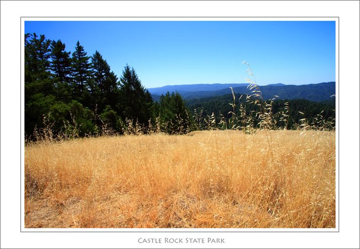 Castle Rock State Park (apparently going to goat rock and climbing to the top results in an amazing view)