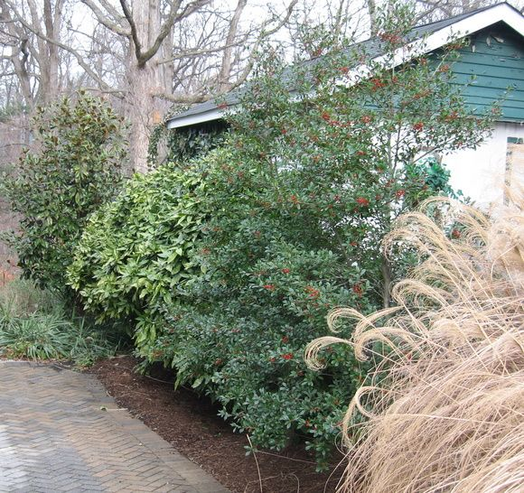 Homestead Gardens Landscaping: Pin On Shrubs And Trees