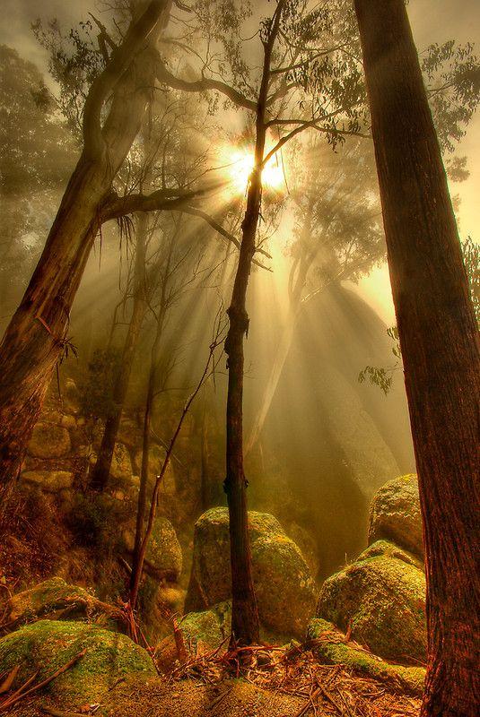 Naturbilder: schöne #Naturbilder #Natur #Wald