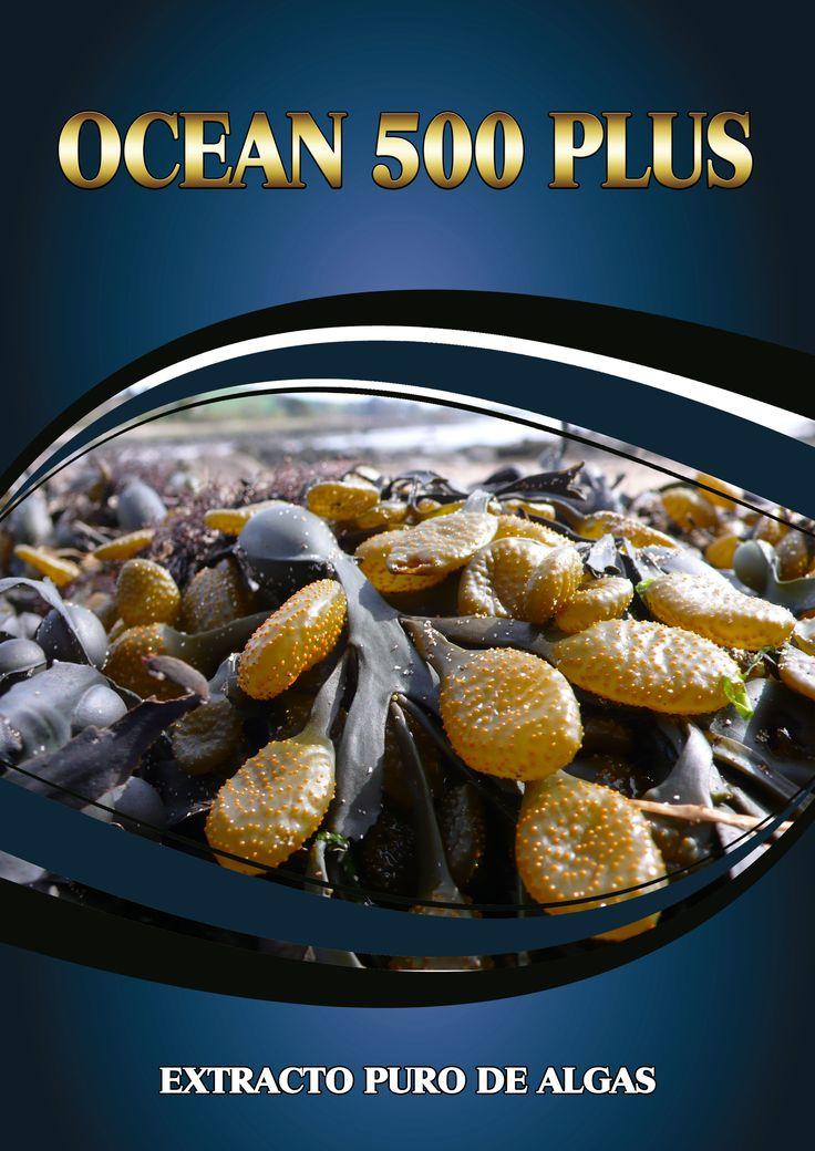 OCEAN 500 PLUS es un producto procedente de la extracción de los componentes y principios activos de Ascophyllum nodosum. Esta especie de alga parda procede de un hábitat que la obliga a soportar condiciones ambientales extremas, motivo por el que ha desarrollado una capacidad especial para soportar el estrés. Esta adaptación provoca que en su composición aparezcan compuestos que la permiten sobrevivir en condiciones adversas. Los extractos procedentes de A.