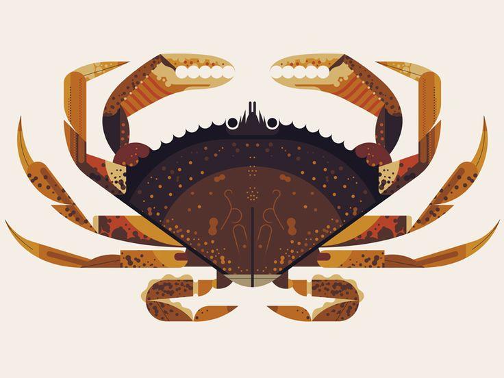 Dungeness Crab by Owen Davey #crab #maritime #seafood #illustration #animal #geometric #graphicdesign #animalgraphic #illu