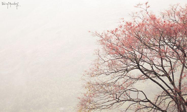 New Leaves! by Dhiraj Amritraj on 500px