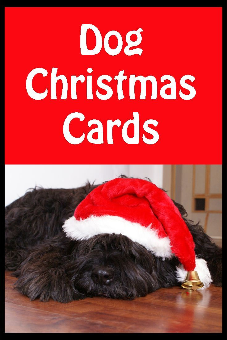 Great selection of doggy Christmas cards perfect for any dog lover to celebrate the holiday season with.