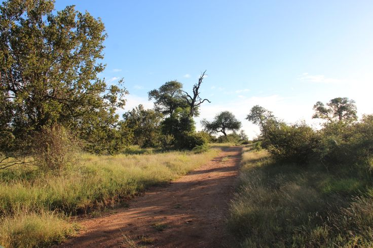 Typically South African Bush! Love to walk in :-)